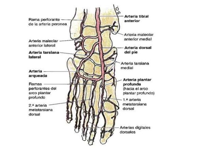 Las vitaminas y e a varikoze de los pies