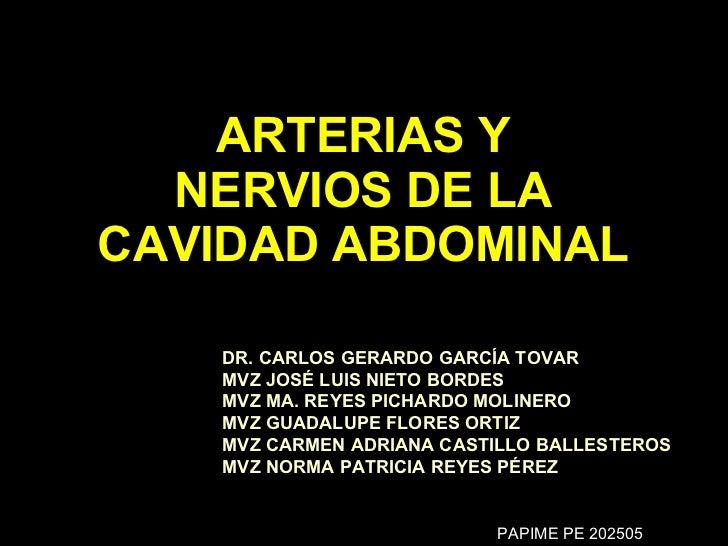 ARTERIAS Y NERVIOS DE LA CAVIDAD ABDOMINAL DR. CARLOS GERARDO GARCÍA TOVAR  MVZ JOSÉ LUIS NIETO BORDES MVZ MA. REYES PICHA...