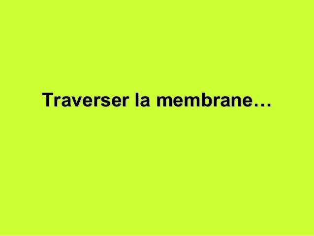 Traverser la membrane…Traverser la membrane…