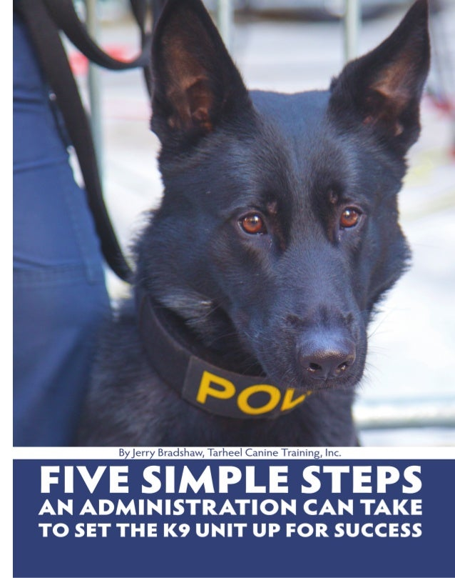 Five Simple Steps to Set K9 up for Success
