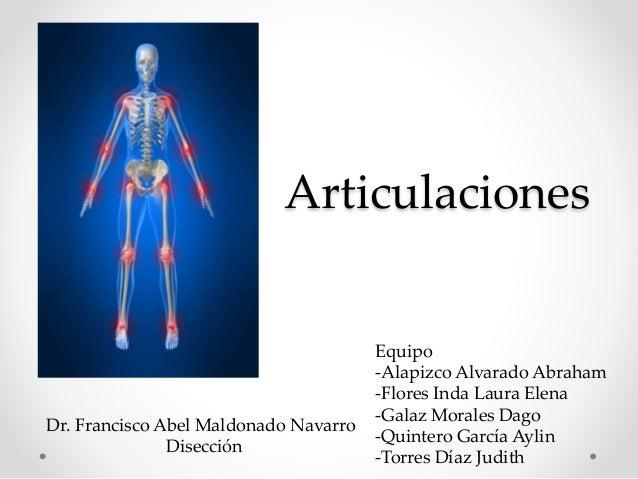Articulaciones Dr. Francisco Abel Maldonado Navarro Disección Equipo -Alapizco Alvarado Abraham -Flores Inda Laura Elena -...