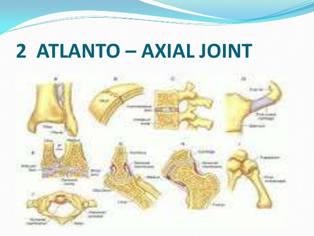 Anfound further Spinal Column   Anatomy  26 Physiology also 5370832 besides 16 additionally 8958510. on dorsal ventral dog