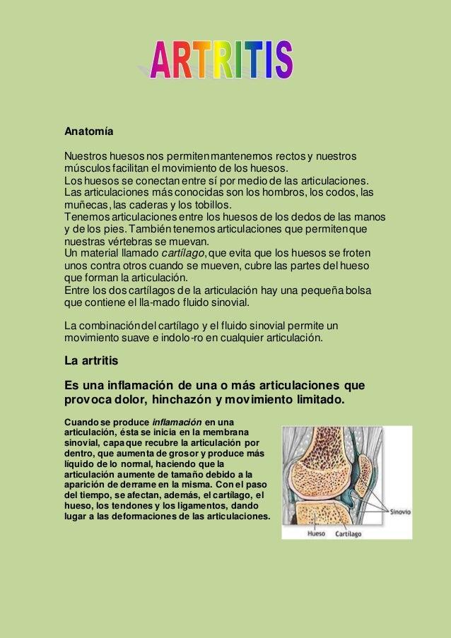 Anatomía Nuestros huesos nos permitenmantenernos rectos y nuestros músculos facilitan el movimiento de los huesos. Los hue...
