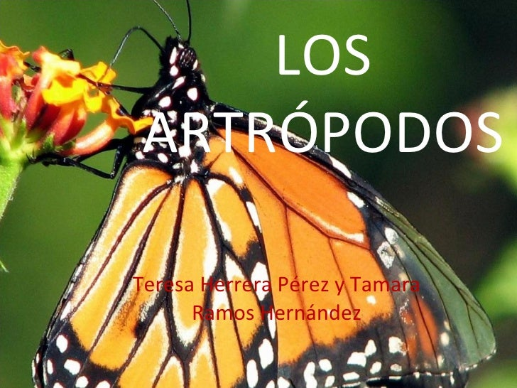 LOS ARTRÓPODOS Teresa Herrera Pérez y Tamara Ramos Hernández