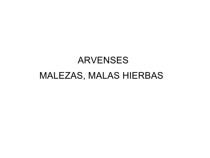 ARVENSES   MALEZAS, MALAS HIERBAS