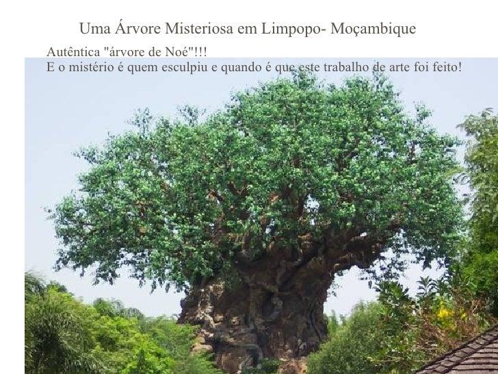 """Uma Árvore Misteriosa em Limpopo- Moçambique Autêntica """"árvore de Noé""""!!! E o mistério é quem esculpiu e quando ..."""