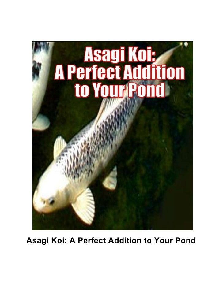 Asagi Koi: A Perfect Addition to Your Pond
