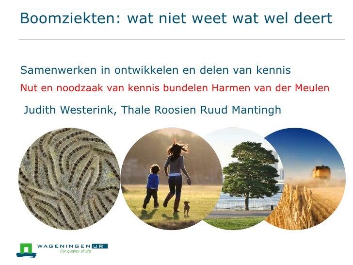 Boomziekten: wat niet weet wat wel deertSamenwerken in ontwikkelen en delen van kennisNut en noodzaak van kennis bundelen ...