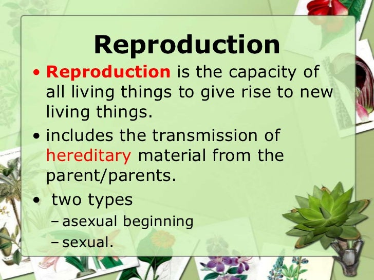 What form of asexual reproduction is shown here picture 102