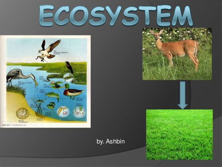 Ashbin's Ecosystem Power Point