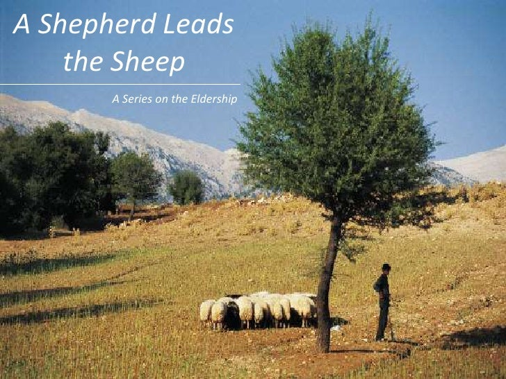 A Shepherd Leads the Sheep<br />A Series on the Eldership<br />