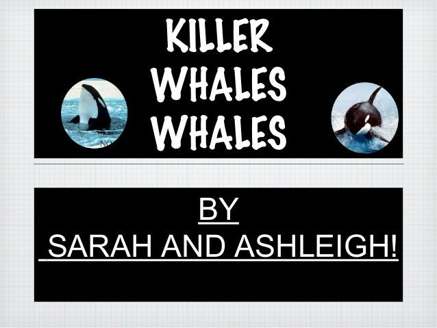 KILLERWHALESWHALESBYSARAH AND ASHLEIGH!