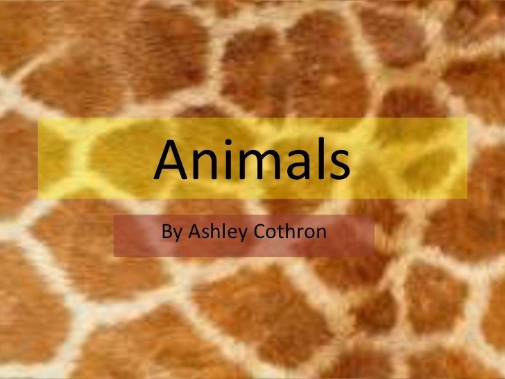 AnimalsBy Ashley Cothron
