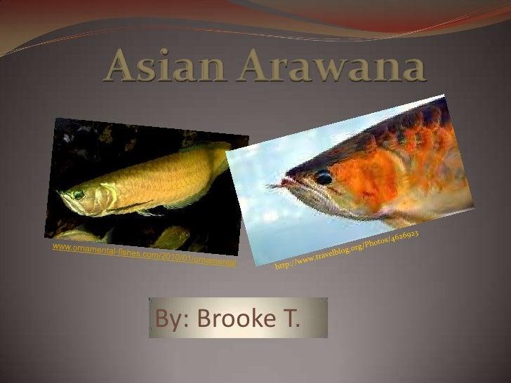 Asian Arowana Power Point