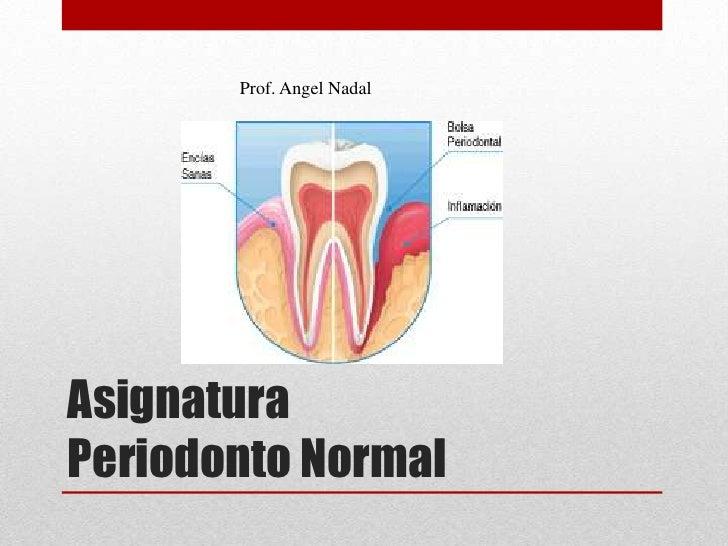 Asignatura Periodonto Normal<br />Prof. Angel Nadal<br />