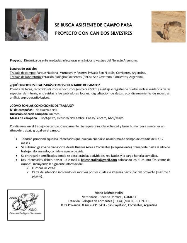 SE BUSCA ASISTENTE DE CAMPO PARA PROYECTO CON CANIDOS SILVESTRES Proyecto: Dinámica de enfermedades infecciosas en cánidos...