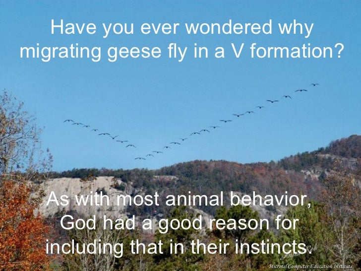 Have you ever wondered why migrating geese fly in a V formation? As with most animal behavior, God had a good reason for i...