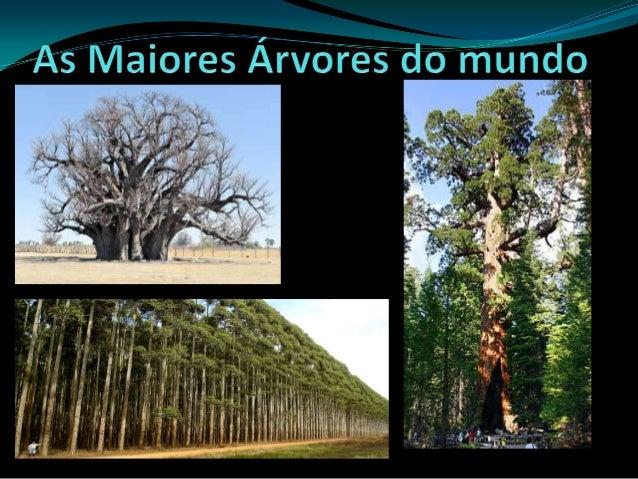 Sequóia GiganteEstudos indicam que as árvores desta espécie chegam a termais de 4 mil anos. Simplesmente elas não param de...