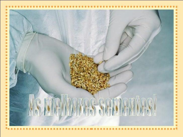 As melhores sementes