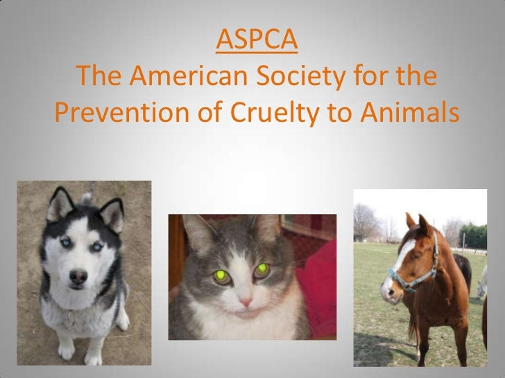 an issue of animal cruelty in society Educate friends and family on the cruelty of animal-based testing and its dangers to science sexual assault of an animal animal legal defense fund v.