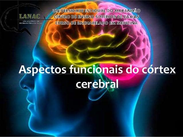 Aspectos funcionais do córtex cerebral
