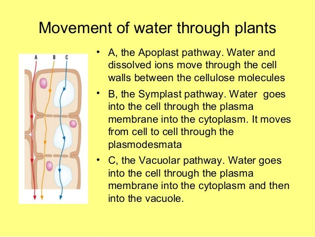 water potential coursework This is one of a series of videos involving cell biology in this video, water potential - which direction water will move based upon pressure potential and.