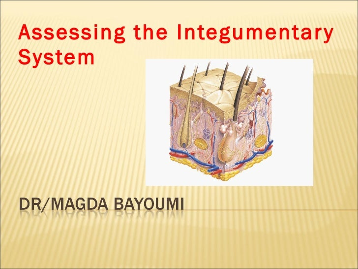 Assessing the Integumentary System