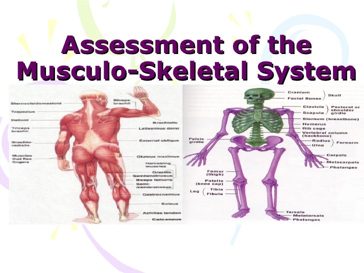 Assessment of theMusculo-Skeletal System