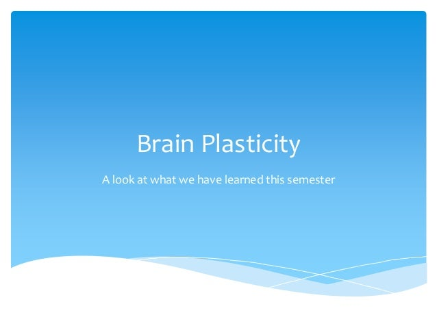 Brain Plasticity A look at what we have learned this semester