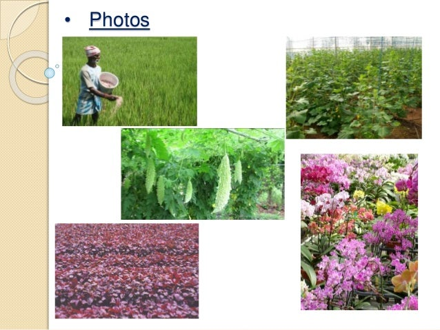 Assignment on agriculture