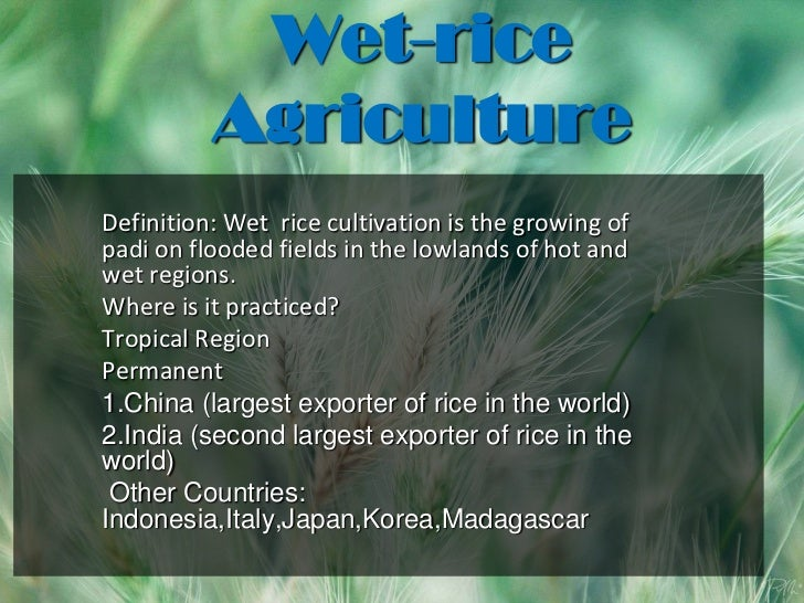 Agriculture Rice Wet-rice Agriculture