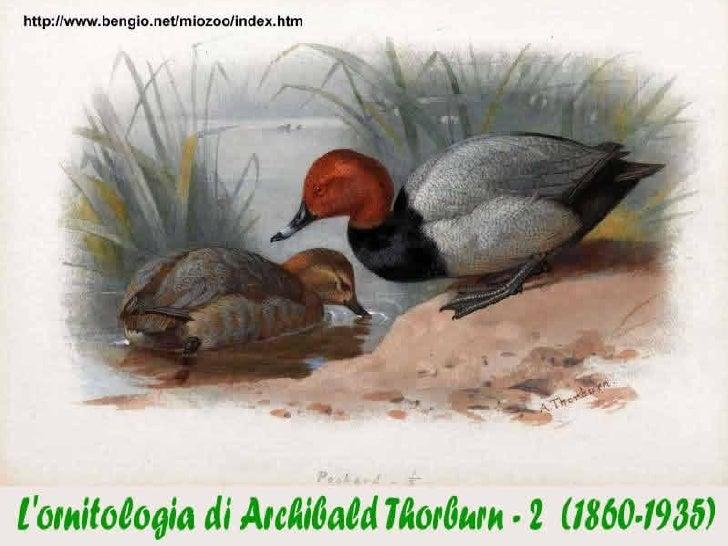 Archibald Thorburn2