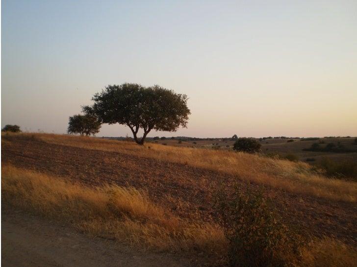 Puesta de sol en Paymogo