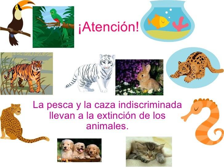 ¡Atención! La pesca y la caza indiscriminada llevan a la extinción de los animales.