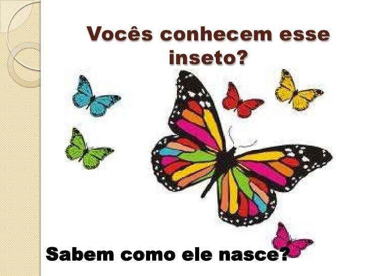 Fases da borboleta