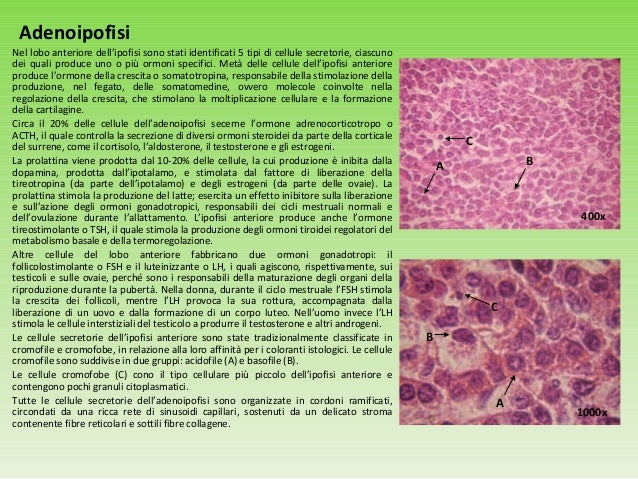 ormoni steroidei struttura