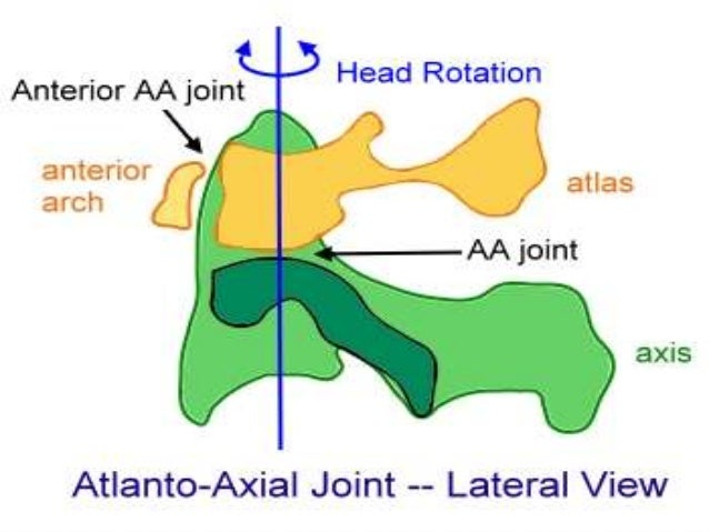 image.slidesharecdn.com_atlantoaxialandoccipitaljoint-141025034050-conversion-gate01_95_atlantoaxial-and-occipital-joint-30-638.jpg