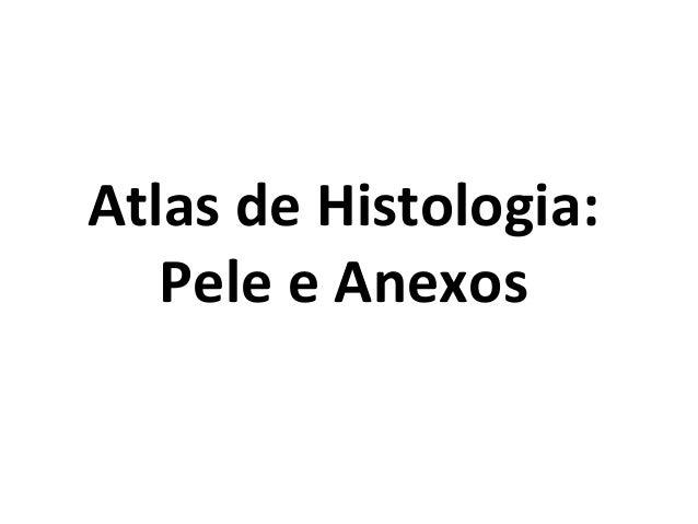 Atlas de Histologia: Pele e Anexos