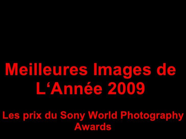Meilleures Images de  L'Année 2009  Les prix du Sony World Photography Awards