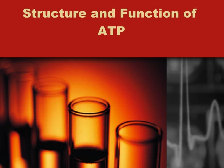 Structure and Function of  ATP