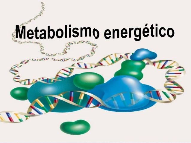 LOS ALIMENTOS: FUENTE DE ENERGÍA Todas las unidades biológicas se alimentan, con la finalidad de proveerse tanto de energí...