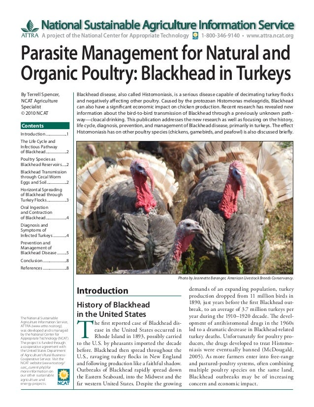 Parasite Management for Natural and Organic Poultry: Blackhead in Turkeys
