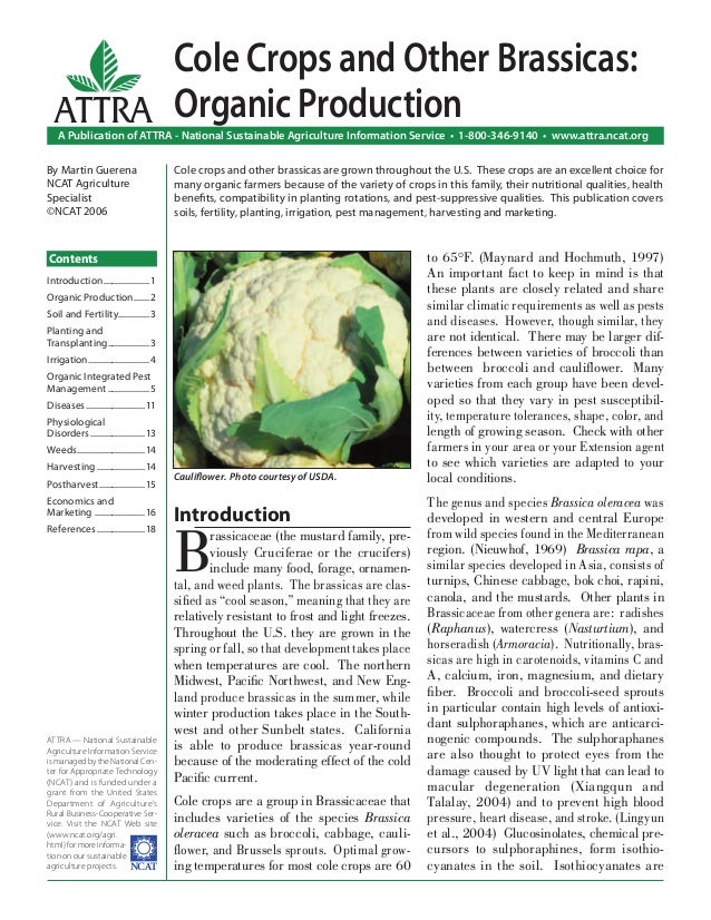Cole Crops and Other Brassicas: Organic Production