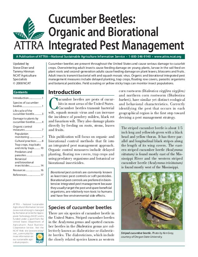 Cucumber Beetles: Organic and Biorational Integrated Pest Management