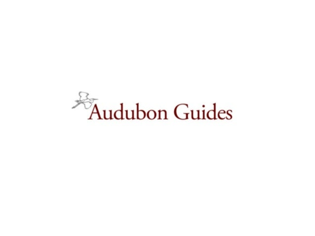 Audubon Guides: Situation Analysis  Work with a classic high tech start up with venture capital funding.  Go late into a...