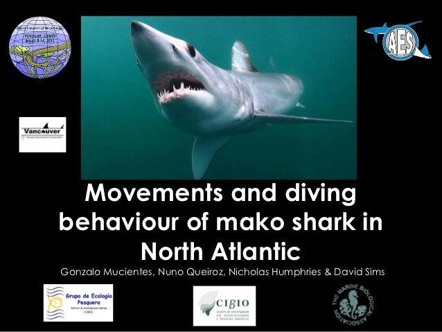 Movements and divingbehaviour of mako shark in      North AtlanticGonzalo Mucientes, Nuno Queiroz, Nicholas Humphries & Da...