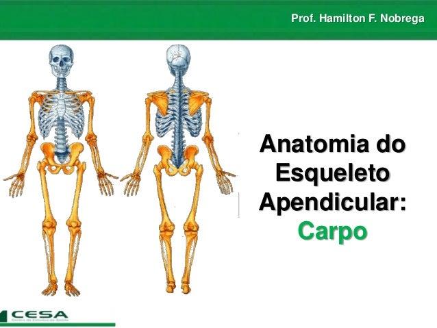 Prof. Hamilton F. Nobrega Anatomia do Esqueleto Apendicular: Carpo