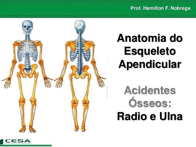 Prof. Hamilton F. Nobrega Anatomia do Esqueleto Apendicular Acidentes Ósseos: Radio e Ulna