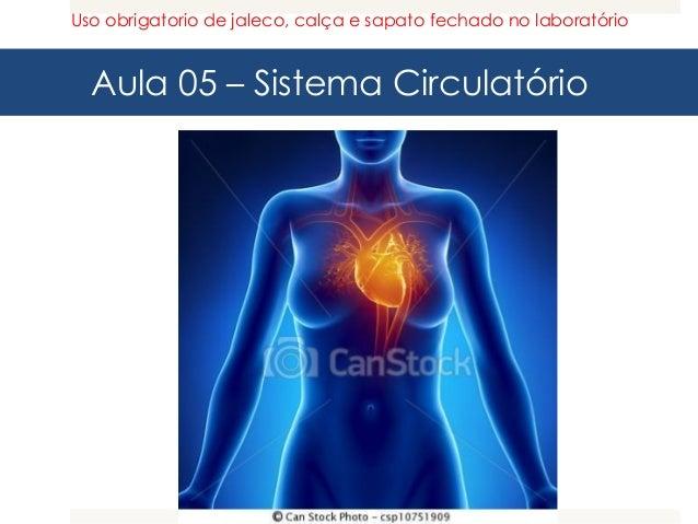 Aula 05 – Sistema Circulatório Uso obrigatorio de jaleco, calça e sapato fechado no laboratório