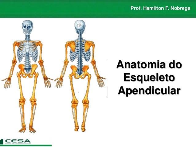 Prof. Hamilton F. Nobrega Anatomia do Esqueleto Apendicular